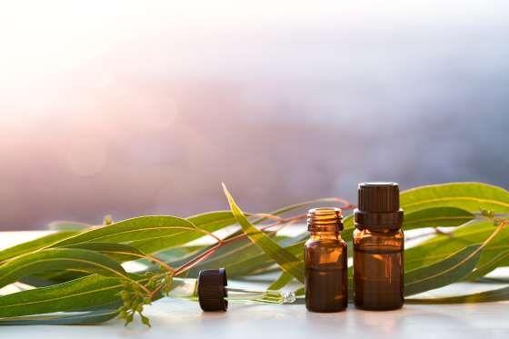 Eukalyptus Ist ein wirksames und effektives Mittel zur Behandlung von Atemproblemen wie Asthma und Bronchitis. Zudem kann die Heilpflanze Fieber senken und Ischias-Schmerzen bekämpfen