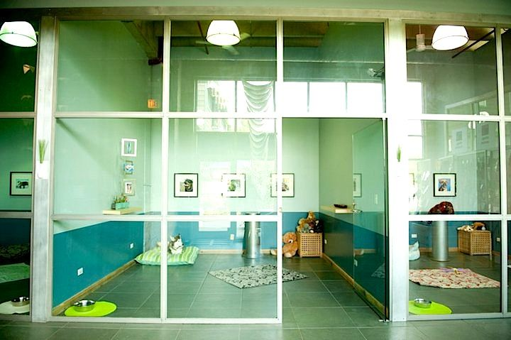The Stay Modern Dog Hotel is a 30,000squarefoot compound