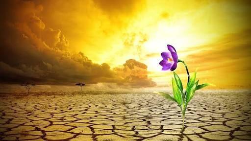Precisamos sobreviver ao caos sem perder a sanidade. Precisamos reacender cada faísca interior para liberar nossos mais belos fogos de artifício. Precisamos crescer, transcender, fortalecer nossa estrutura, alcançar os nossos sonhos. Precisamos nos livrar das paredes para, enfim, vislumbrar o nosso horizonte.
