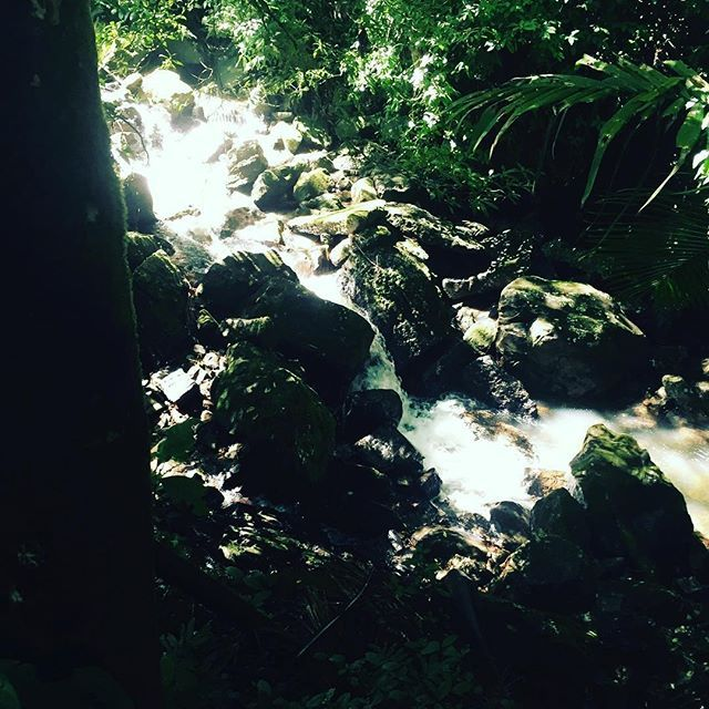 El yunque national forest - we did the big trail up to the top! #travelblogger #trivelitup #forest #puertorico #travelphotography by @trivelitup.  #pic #picture #photos #photograph #foto #instaphoto #pictures #fotografia #color #capture #camera #moment #insta #pics #snapshot #사진 #all_shots #写真 #composition #фото #nice #good #day #lovely #perfect #passportready #getaway #instavacation #travelwriter #travelblogger #travelblog #traveltheworld #travelphoto #igtravel #travelbug #travelpics…