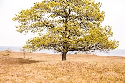 Erika Olofsson - Livets träd