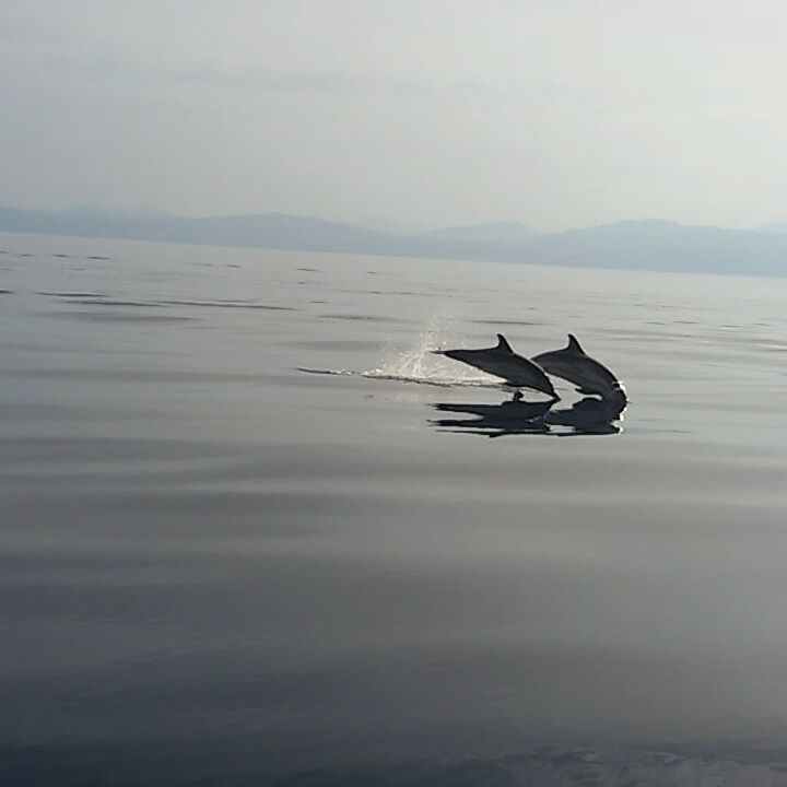 Δελφίνια στον Κορινθιακό