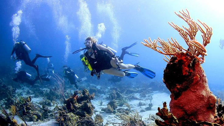 The Ladies of Scuba Diving Magazine Celebrate PADI Women's Dive Day 2017  News  The editors of Scuba Diving magazine reveal some of their favorite on the job moments in celebration of PADI Women's Dive Day.  If you like our pins please follow us: