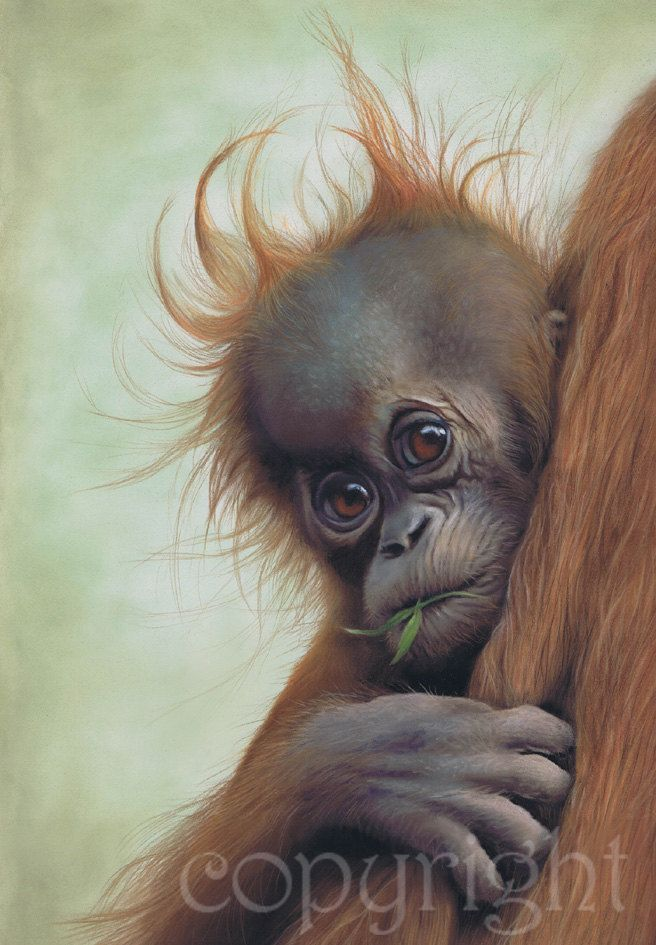 Clinging On baby orangutan wildlife art print. £45.00, via Etsy.
