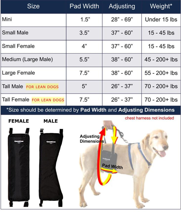 GingerLead Dog Sling Sizing | Rear Support Harnesses for Toy to Giant Breed Dogs