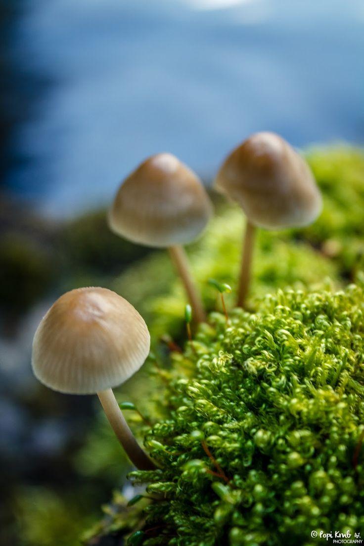 A tiny world © Popi Kmb