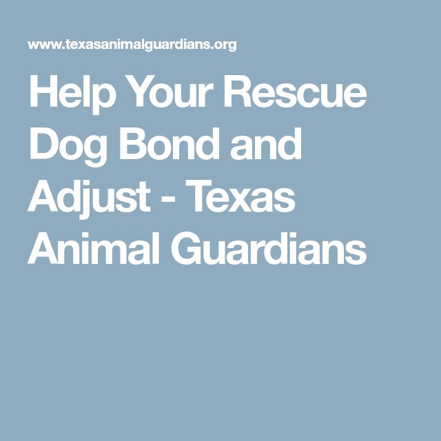 Help Your Rescue Dog Bond and Adjust - Texas Animal Guardians