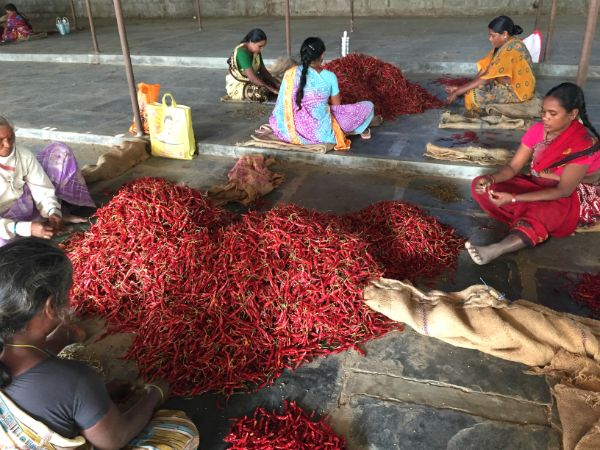 land of chillies and beautiful sarees