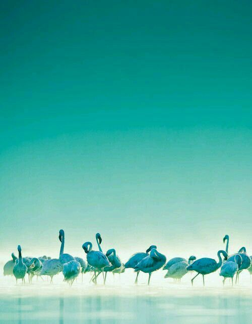 flamingos turquoise sky ocean surf