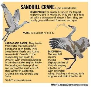 "The sandhill crane is the largest migratory bird in some states along the Sandhill Crane Migration ""Flyway"" that passes through Nebraska on the Platte river between Grand Island and Kearney, NE.  - There also are some Bald Eagles that show up along parts of the Crane Migration Flyway.  --  Details on the Sandhill Crane species at -- http://en.wikipedia.org/wiki/Sandhill_crane"