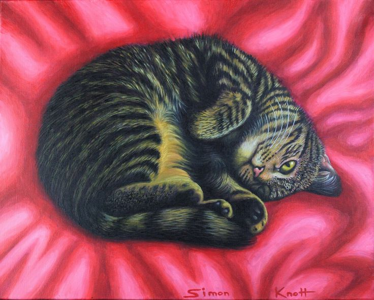 GIGI Curl on a red rug by Simon Knott #artist cat art