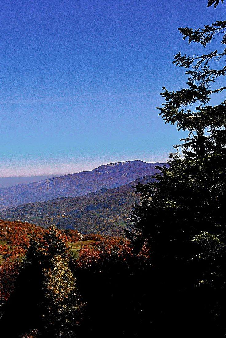 Hig Val Parma Forest  -  The Lagoni The Mount Navert from Cirone pass