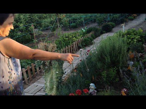 Huerto del concurso hortalizas de Santa Ana