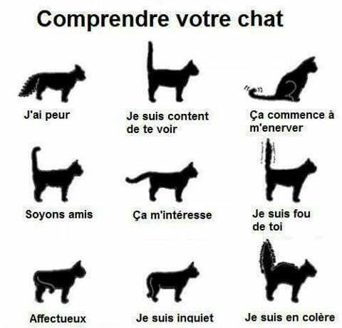 Le chat et ses comportements
