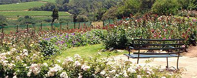 Chart Farm Roses and Coffee Terrace, Wynberg Park *PICK ROSES *MOMS *VIEWS *COFFEE/CAKE *BREAKFAST