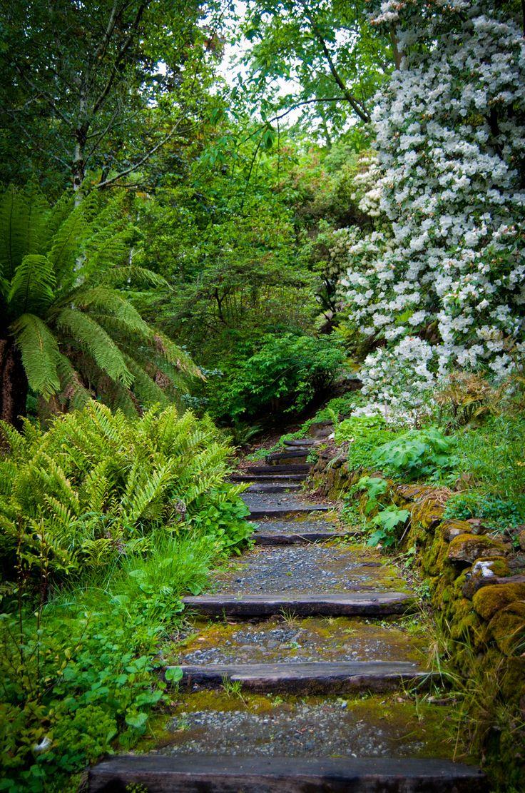 Mossy Path. Taken at the Mount Lofty Botanic Gardens, South Australia