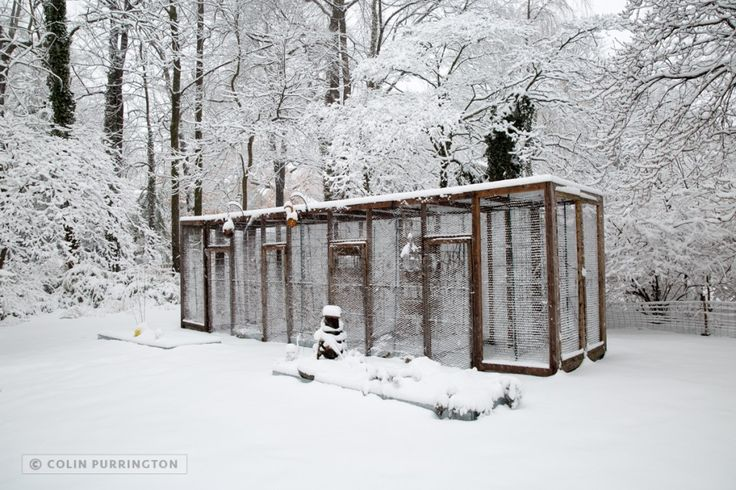 My squirrel proof garden enclosure also keeps out birds - How to keep raccoons out of garden ...