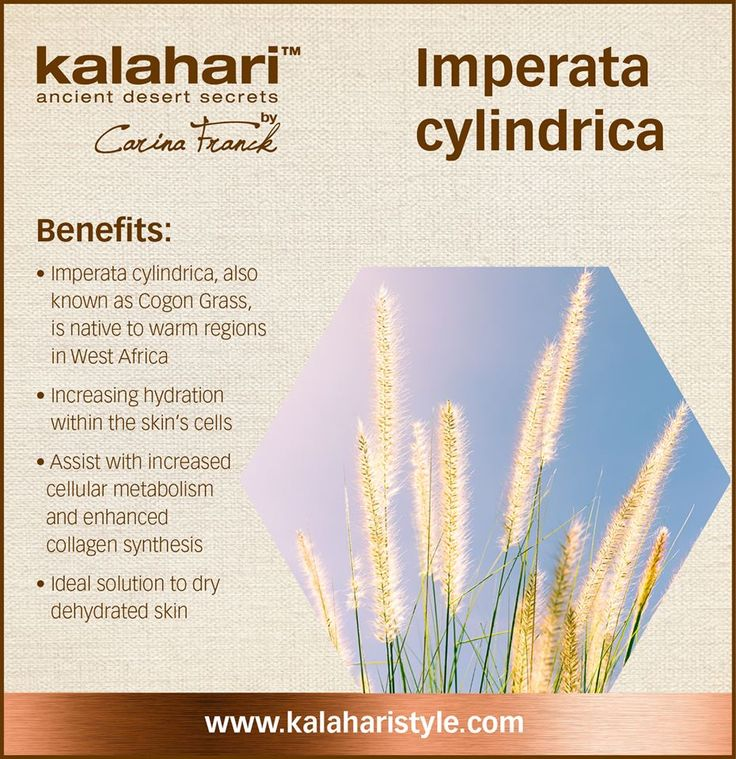 The Imperata cylindrica also known as the Cogon Grass is found in the large flooded areas of warm Western Africa. The plant is composed of 65-75% water and because of this we use it to increase the skins hydration by enhancing the cellular metabolism and collagen production which results in reducing fine lines and wrinkles. Our Phyto Salve will significantly assist with dry and dehydrated skin conditions.