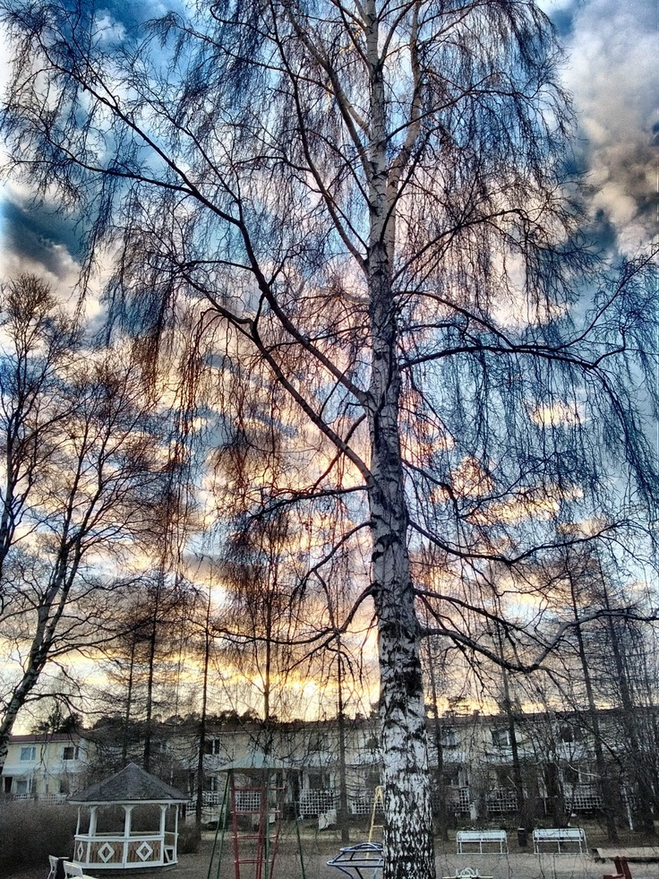 A birch bathing in the evening light. Lumia 920, HDR app enhanced mode.