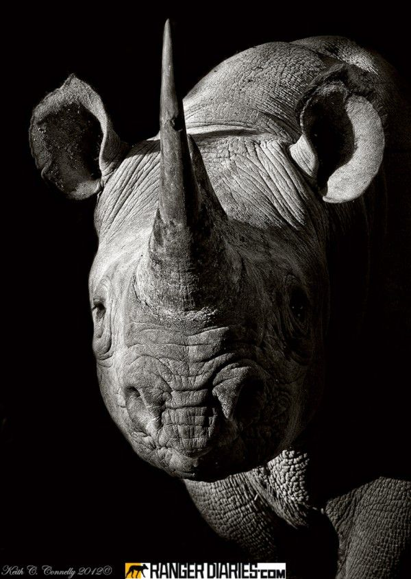 Do You Support Sale of Rhino Horn Stockpiles?
