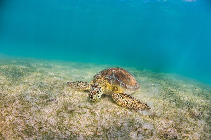 marine sea turtle