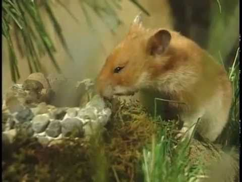 Tales from the riverbank Hammy the Hamster Vol 1 Ep 1