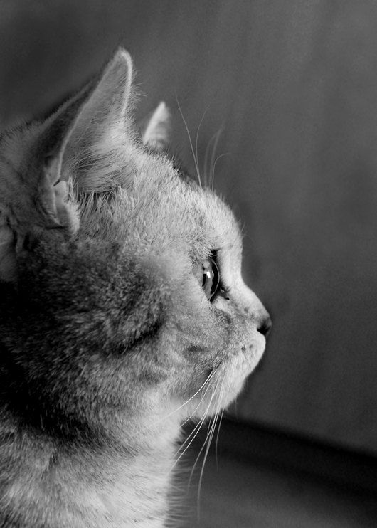 Wonder-Cat Photography-Small Fine Art Photography