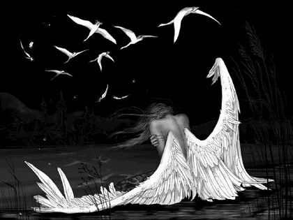 Falling Feathers | This is the fantastic angels falling broken feathers Wallpaper ...