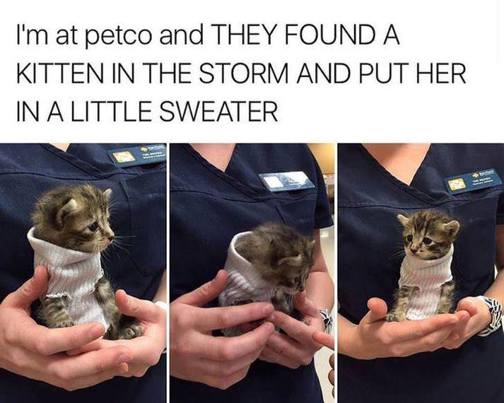 Poor little kitten, you are safe now. Awwwww