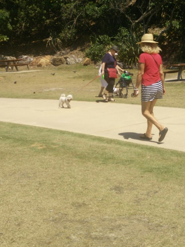 The path by the beach is very popular for dogs and people at Burleigh Heads on the Gold Coast
