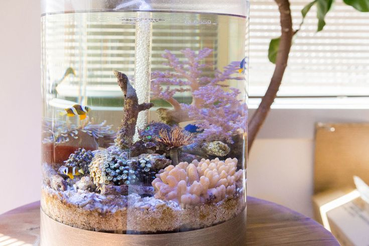 水換え不要の水槽で誰でもアクアリウム。簡単オシャレに海水魚水槽を楽しめます。