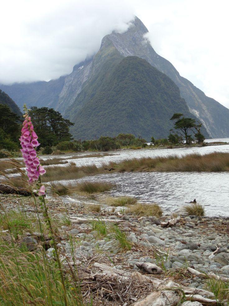 Miter Peak Milford Sound New Zealand By www.silberhorn.co.nz  #travel #nz #silberhorn #nztravel #roadtrip