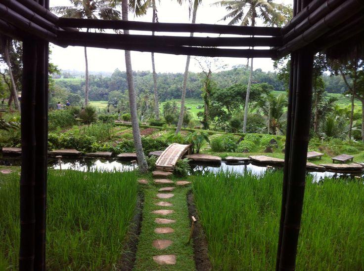Stones path, bamboo bridge.. #iPhone #NoFilter