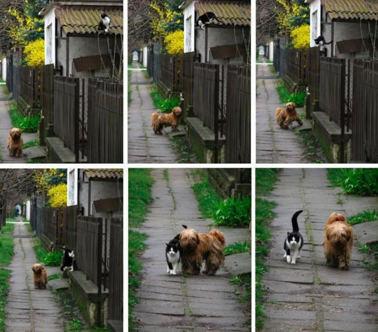 EVERY DAY AT THE SAME TIME, SHE WAITS FOR HIM. HE COMES AND THEY GO FOR A WALK. #cutedogsimages and #cutecatsimages