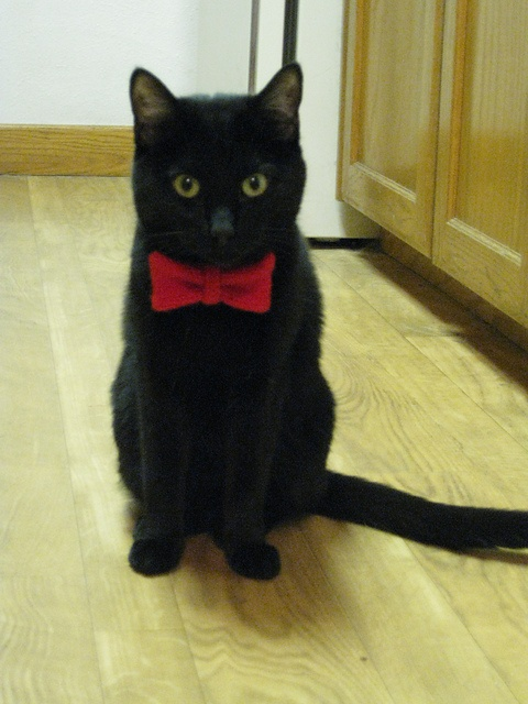 14 best images about cats in bow ties on cats
