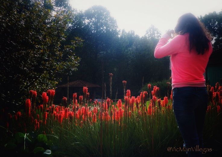 Fotografiando Flores y Cabaña - Photographing Flowers and Cottage