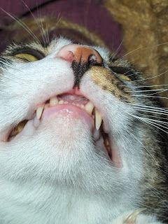 Blink News Agency: Smiling cat