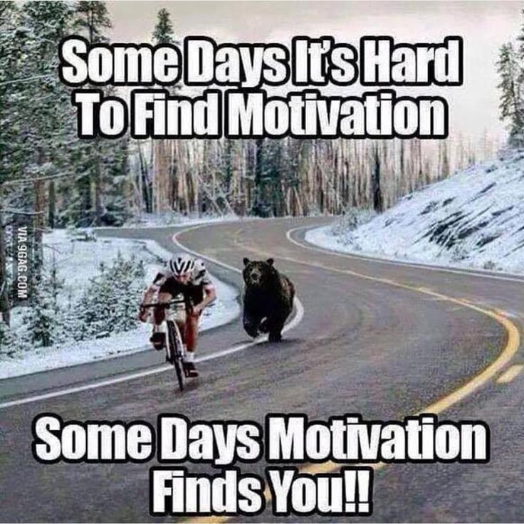 Some days motivatuon finds you #motivation #funny #humour #bear