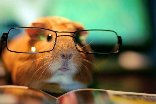 ¡No puedo dejar de leer! #hamster #libros