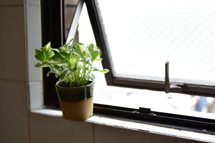 ちょっと暗め 浴室やトイレにオススメ観葉植物5選 Lovegreen ラブ
