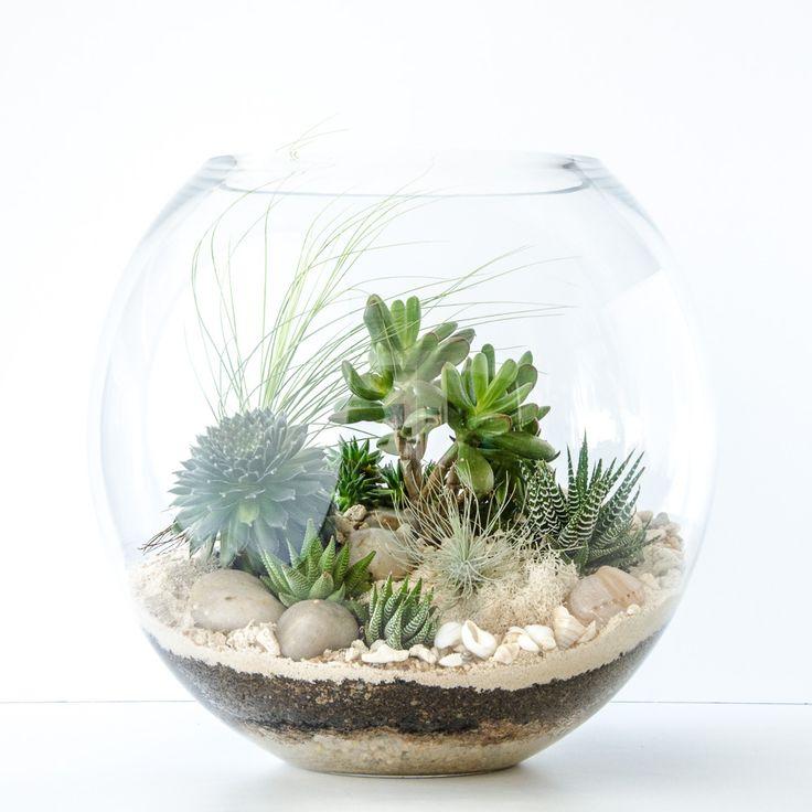 Customisable – select options below! Succulent TerrariumTerrarium ... - Top 25+ Best Succulent Terrarium Ideas On Pinterest Terrarium