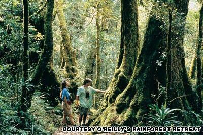 Binna Burra to Green mountain, South East Queensland