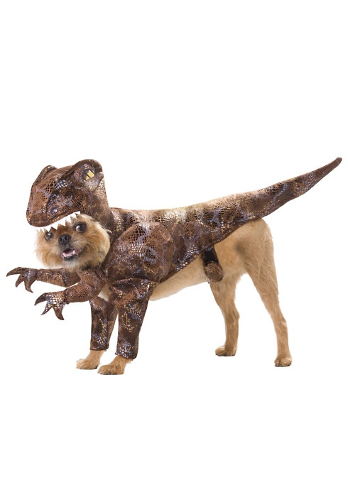 "Is this a ""Jurassic Park"" inspired raptor?: Animal Planets, Animals, Petcostumes, Halloween Costumes, Dogs Costumes, Pets, Dog Costumes, Raptors Dogs, Pet Costumes"