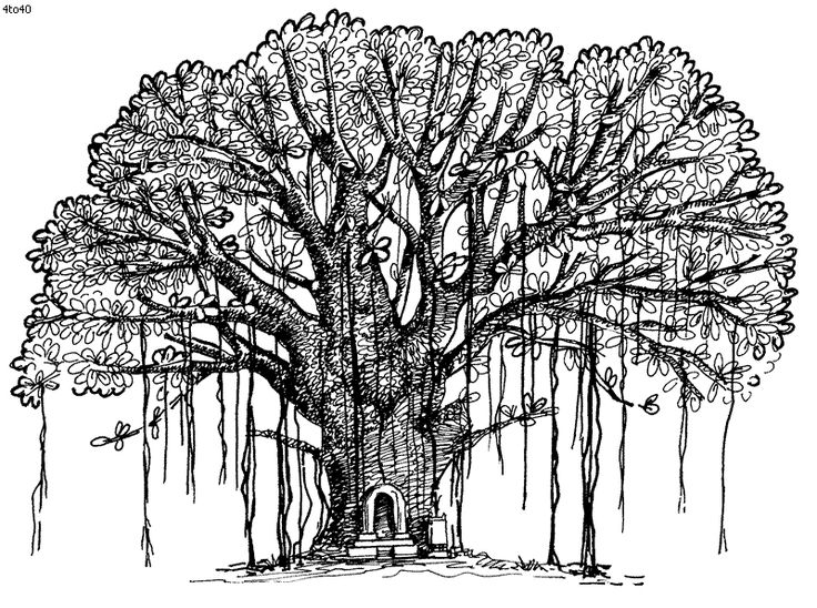201105 illo Heidewald DryadsandTrees ILLO3 likewise  as well  together with  additionally  in addition 862107561 printable bare tree branch clip art36920 as well  in addition  together with Araucaria Leaves in addition SpookyHalloweenTree furthermore . on cypress trees coloring pages free printable
