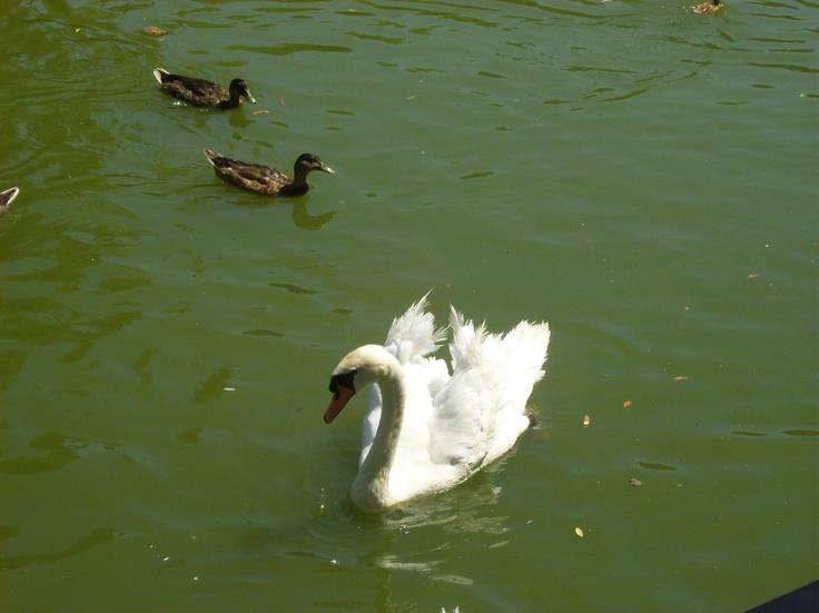 'floating swan' Kuşadası/Turkey by S.Özdemir