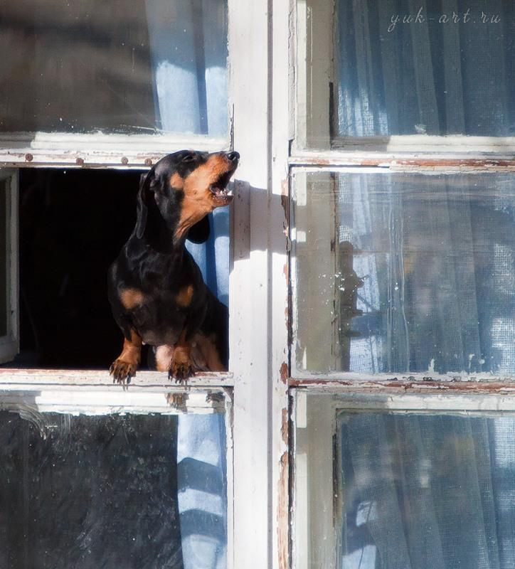 Burglar alarm!  TV company had the nerve to ask if I wanted an alarm system when I have a Doxie.  The nerve!