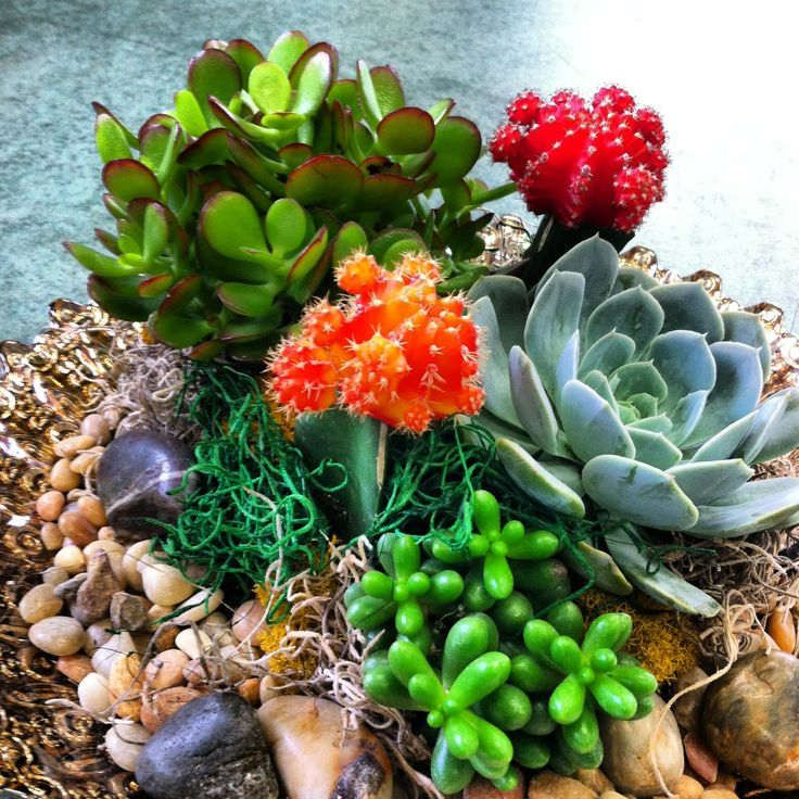 moon cacti and succulents dish garden