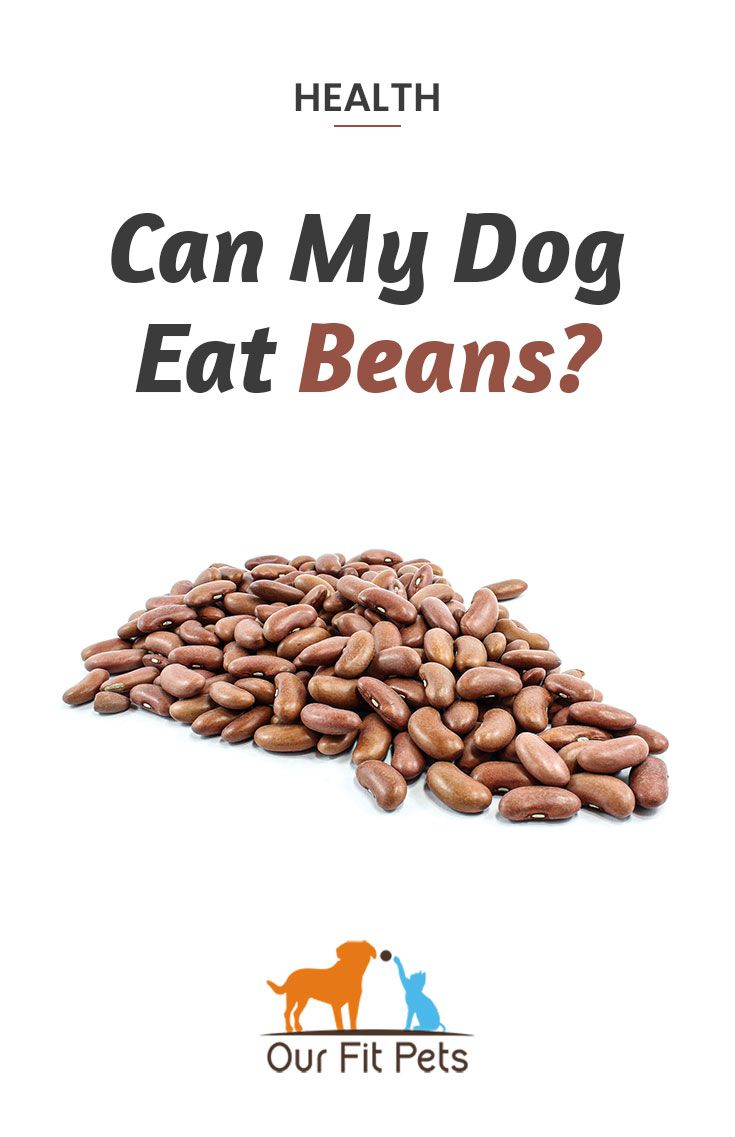 Can My Dog Eat Beans Our Fit Pets Dog Eating Dog Food Recipes Eat