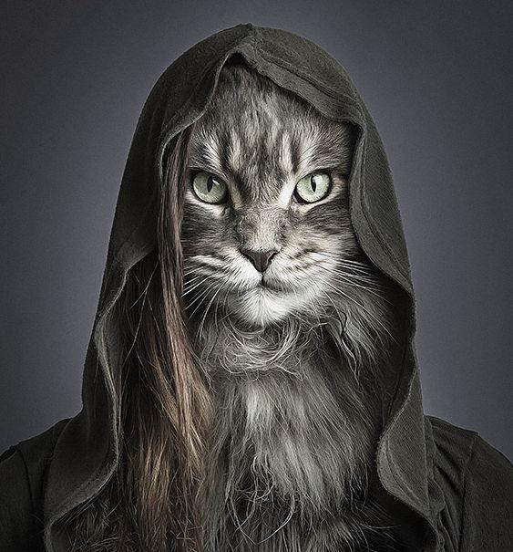 El fotógrafo suizo Sebastian Magnani,  quien anteriormente creara una serie de retratos hilarantes de perros disfrazados como seres humanos, recientemente ha producido una serie de seguimiento titulado 'Undercats', en la cual hace lo mismo pero con los gatos.