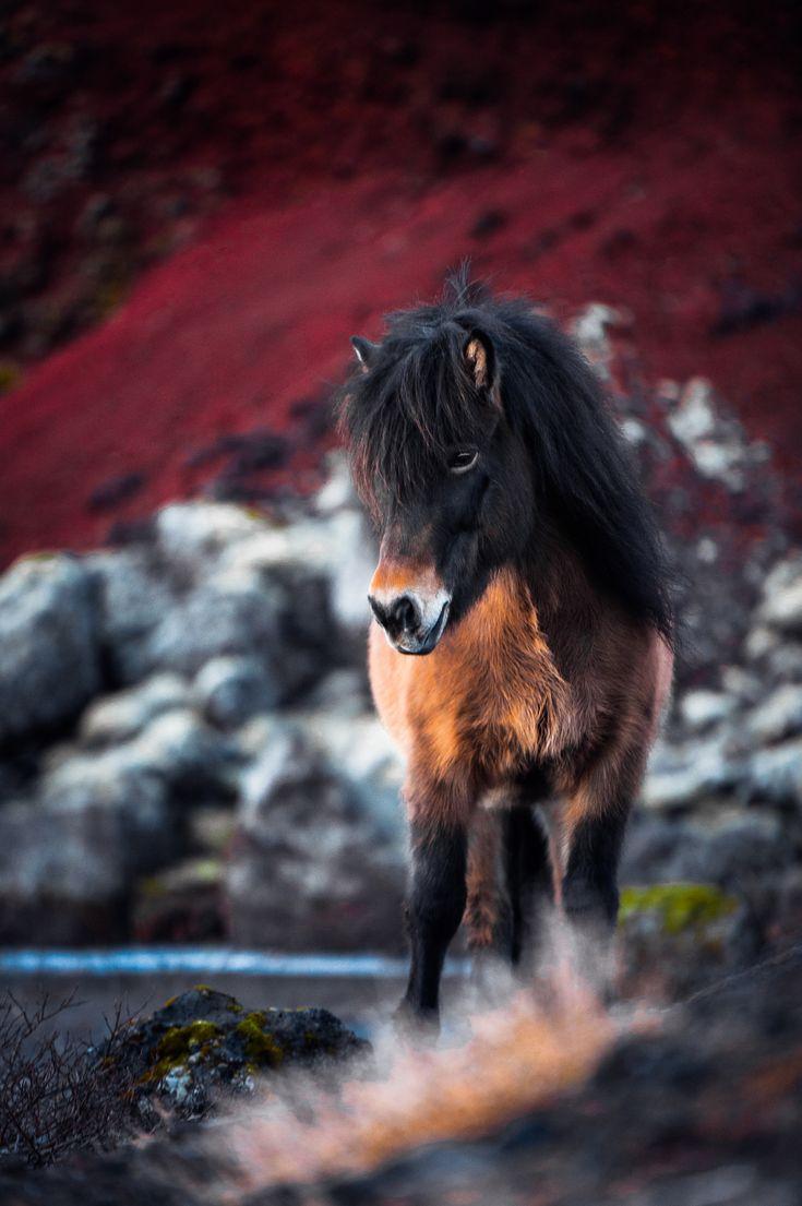 Cavalos – Anna Ibelshäuser Photography   – Horses